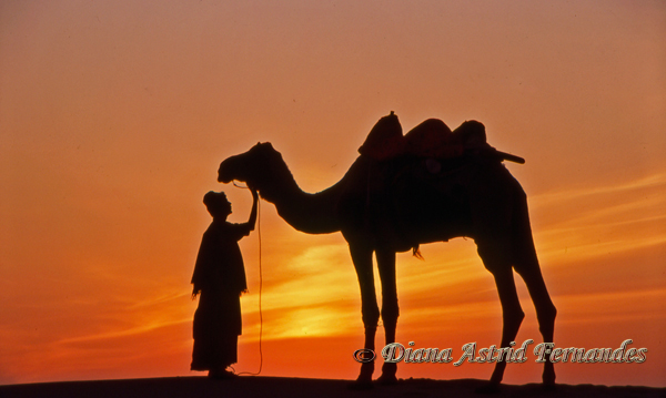 India-Rajasthan-lad-and-camel