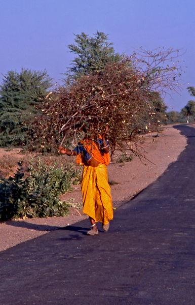 India-woman-carrying-a-load-of-brush